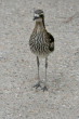Curlew Bird Photo